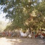 A causa della mancanza di strutture adeguate, i pellegrini arrivano al santuario recando il necessario per dormire e mangiare.